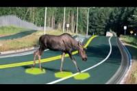 Solar FREAKIN' Roadways!