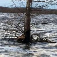 Tree Decoy